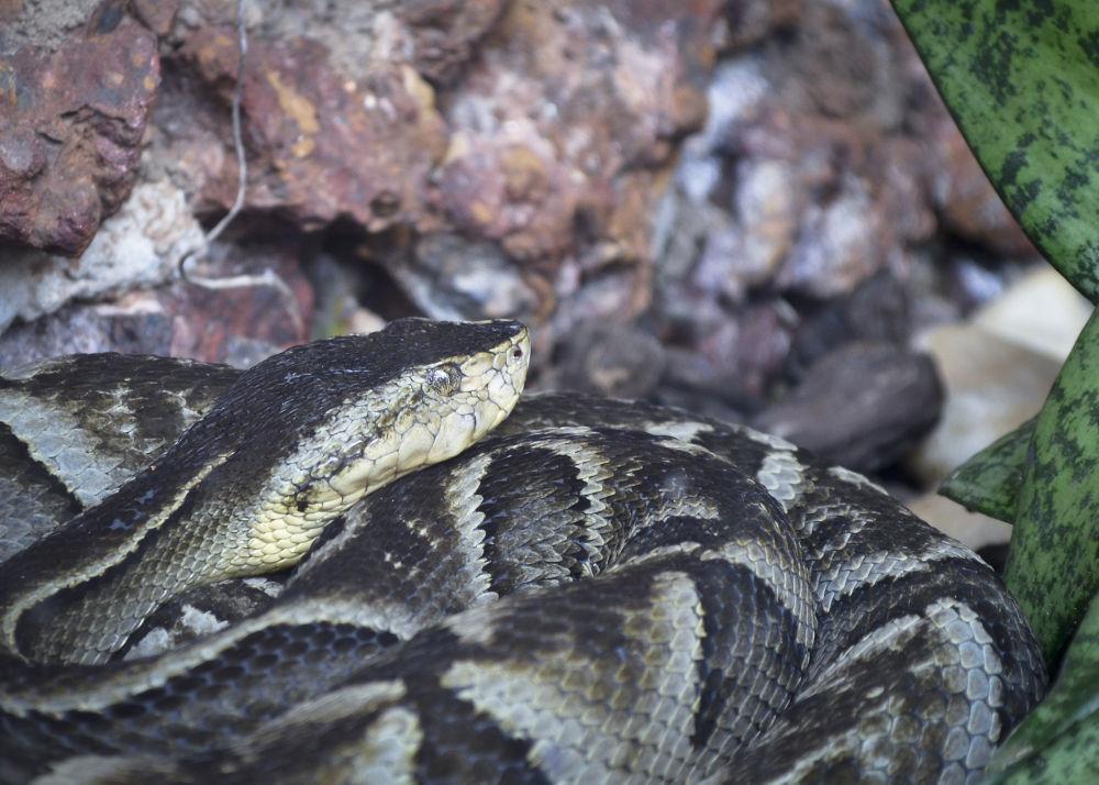 Photo in Animal #cobra
