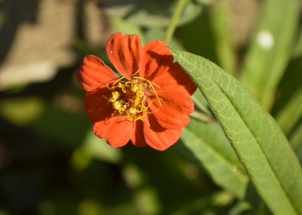 Photo in Nature #flor #natureza