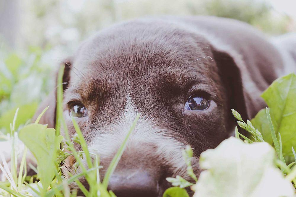 Photo in Animal #rafa #dog #animal #pet #puppy