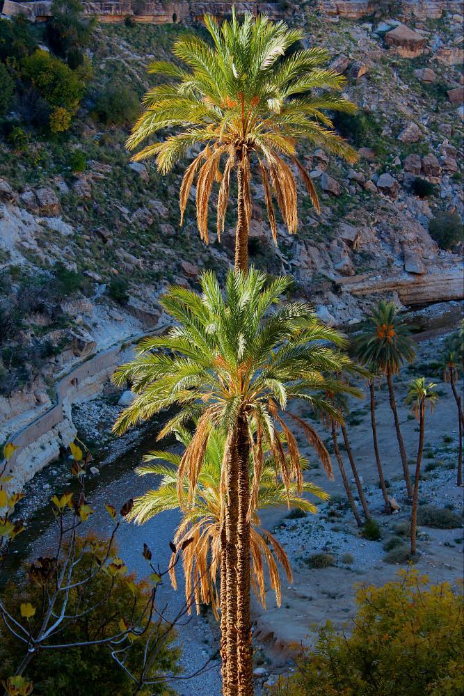 Photo in Landscape #palmier #desert #algeria #ghoufi #landscape