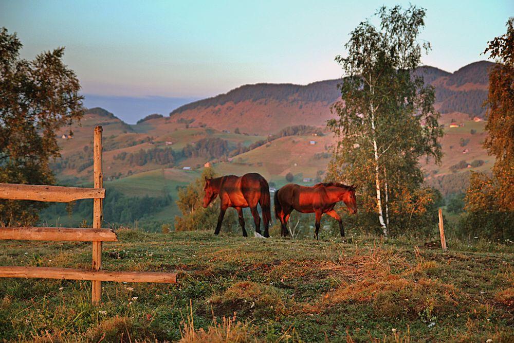 Photo in Random #horses #light #sunrise