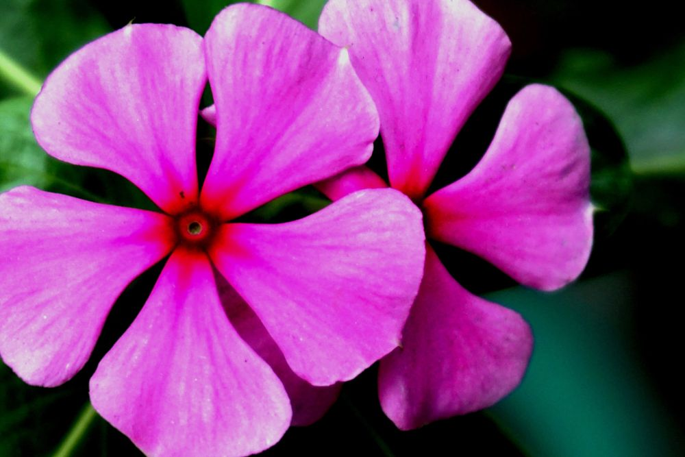 Photo in Nature #flowers #pink flowers #flowers around