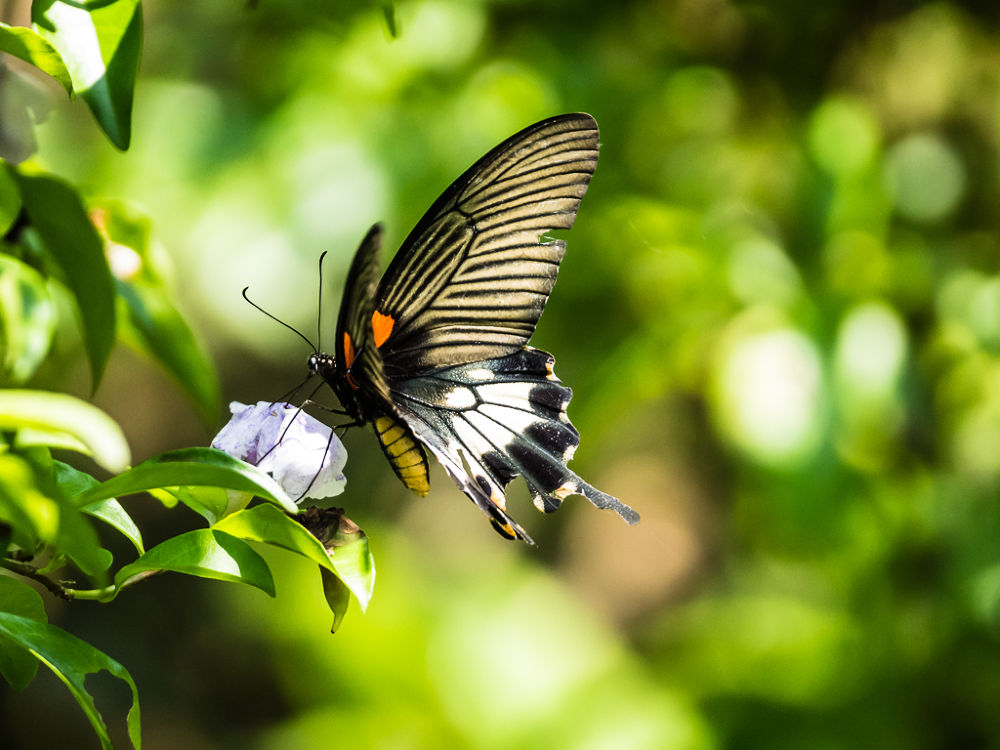 Photo in Animal #lepidoptera