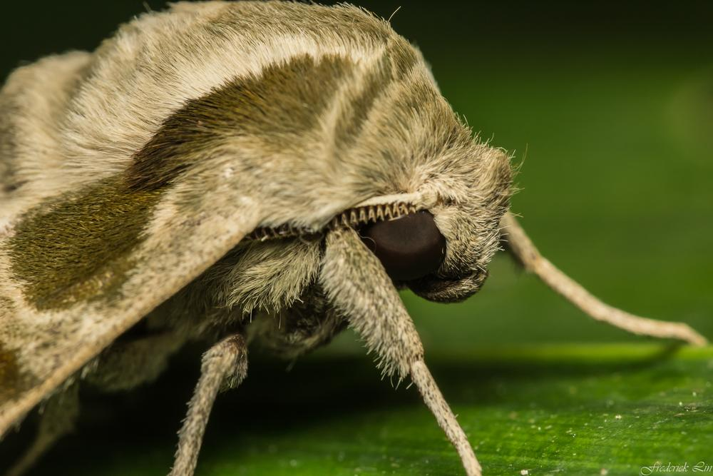 Photo in Animal #moth