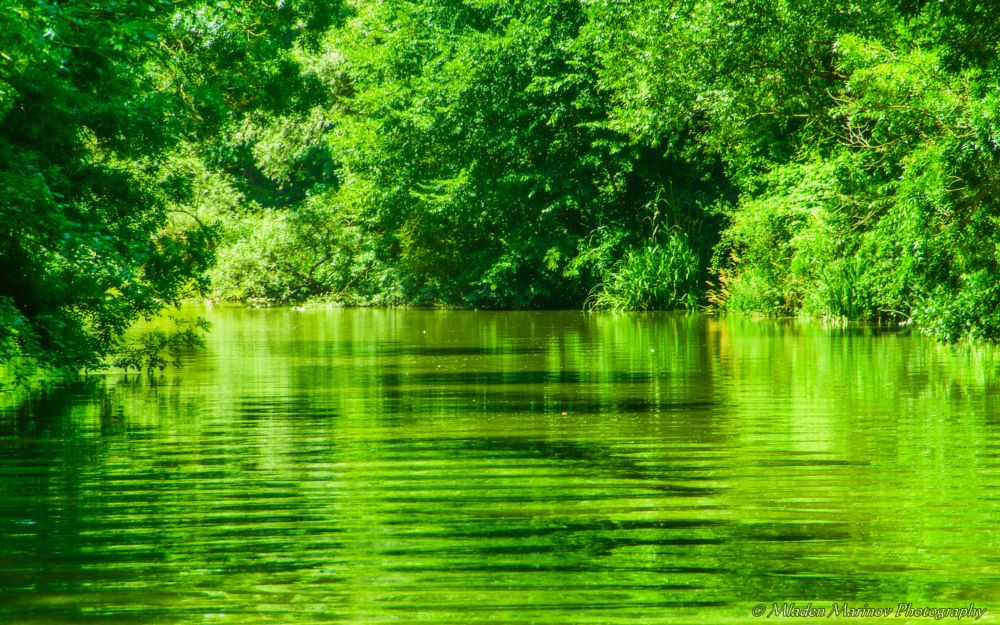 Photo in Nature #earth #nature #colours #shades #reflections