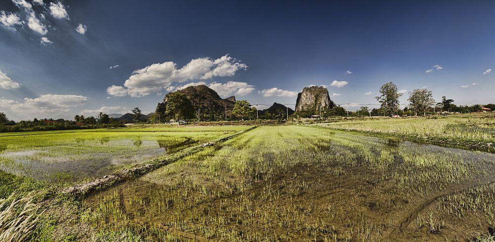 Photo in Nature #rice field #sukhothai #mountain