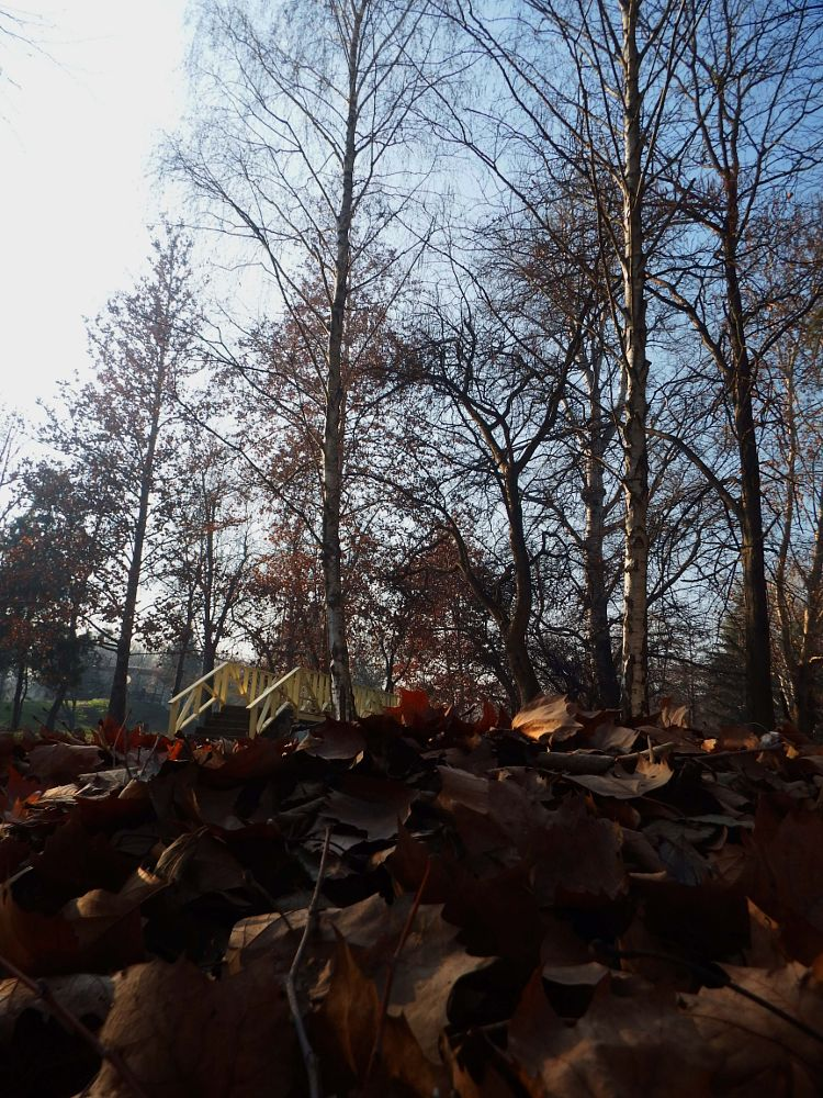 Photo in Landscape #landscape #view #bridge #fallen #leaves #city park #trees #winter