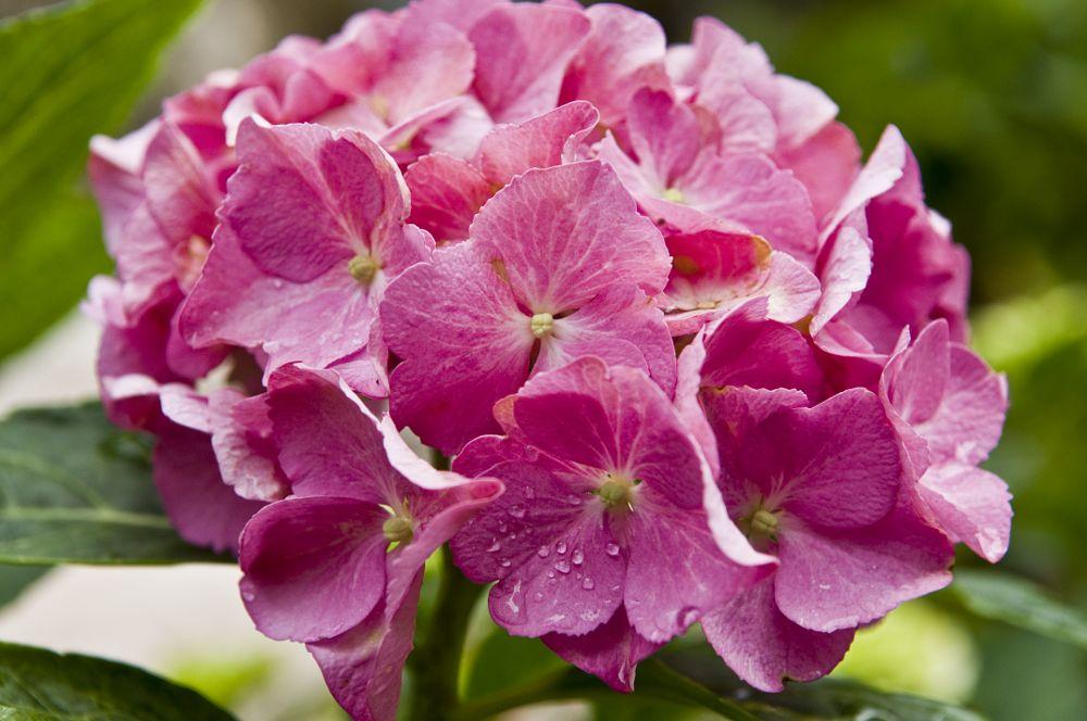 Photo in Nature #fiore #colori #macro