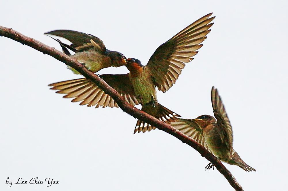 Photo in Animal #birds #nature #singapore