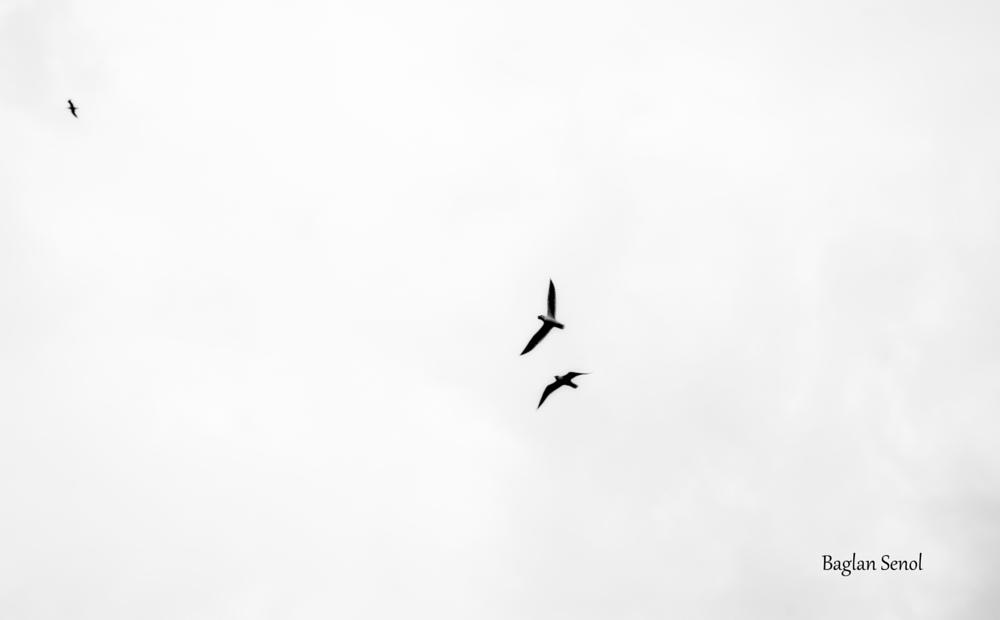 Photo in Black and White #b&w #birds #flying