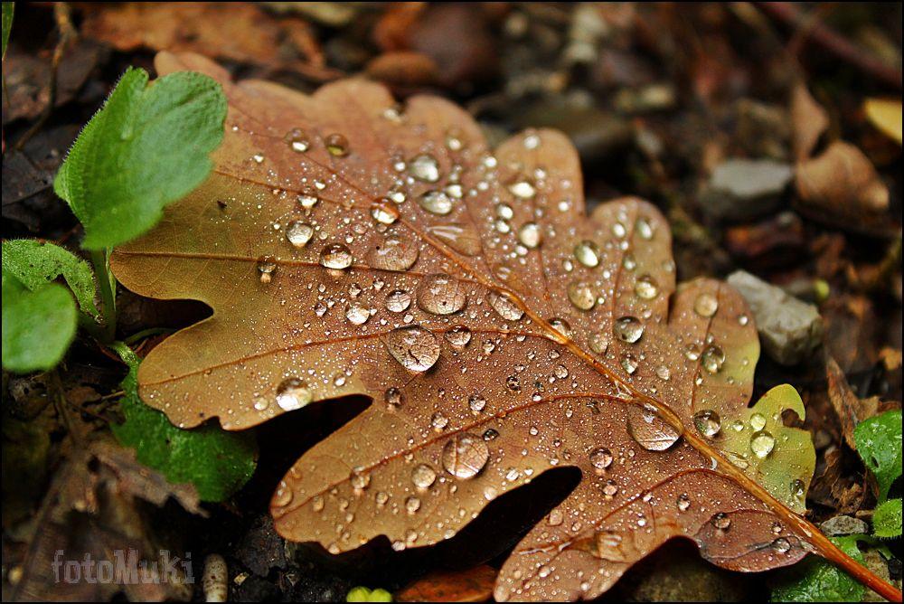 Photo in Macro #autumn