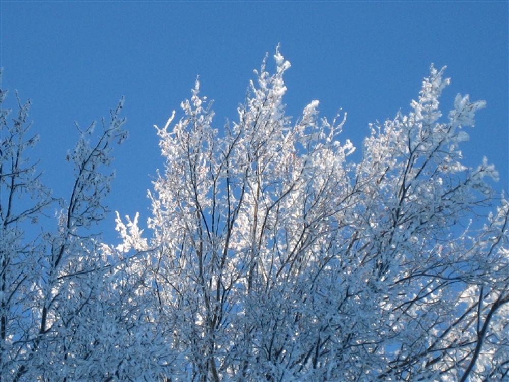 Photo in Random #cold
