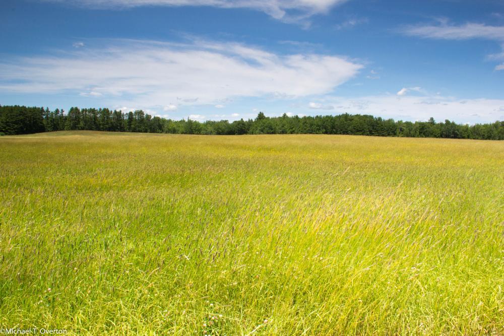 Photo in Random #summer #hayfield