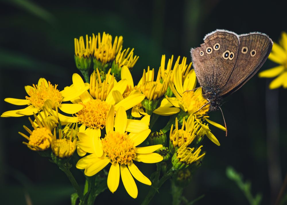 Photo in Macro #butterfly #insect #flower #summer #polen #wings