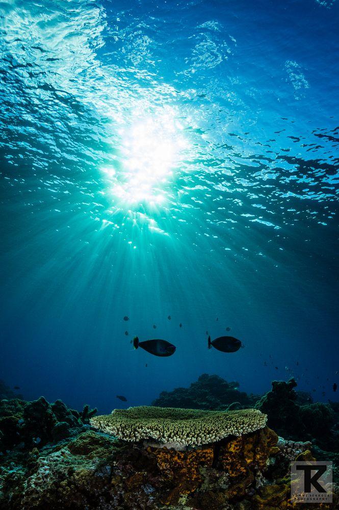 Photo in Underwater #underwater #scuba #diving #ocean #coral #reef #sea #taiwan #green island #unicornfish