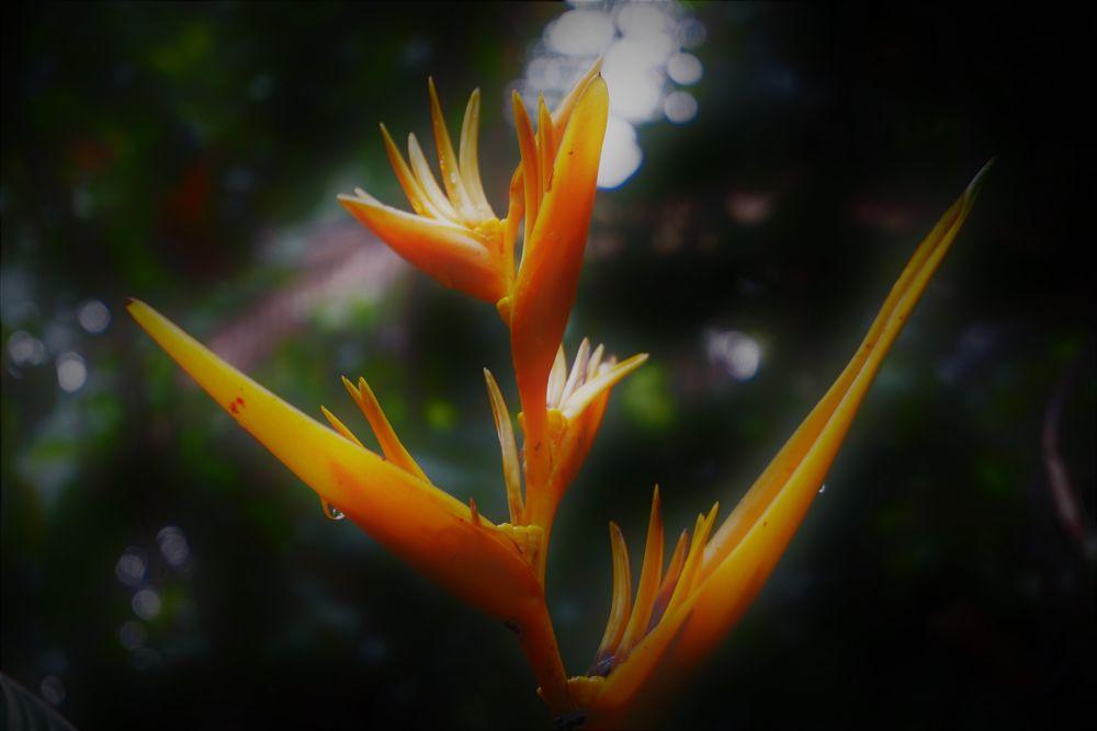 Photo in Nature #flowers #garden #rain