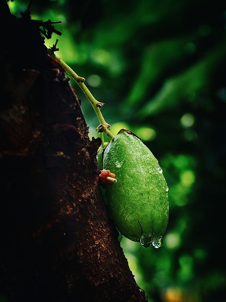 Photo in Nature #fruit #nature #indonesia