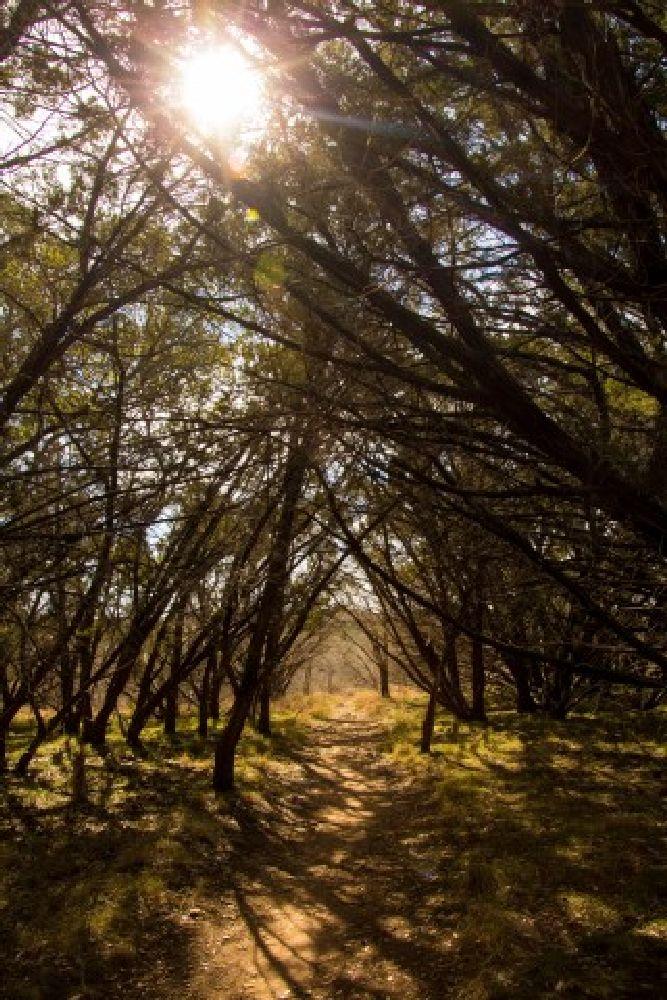 Photo in Nature #sun #trees