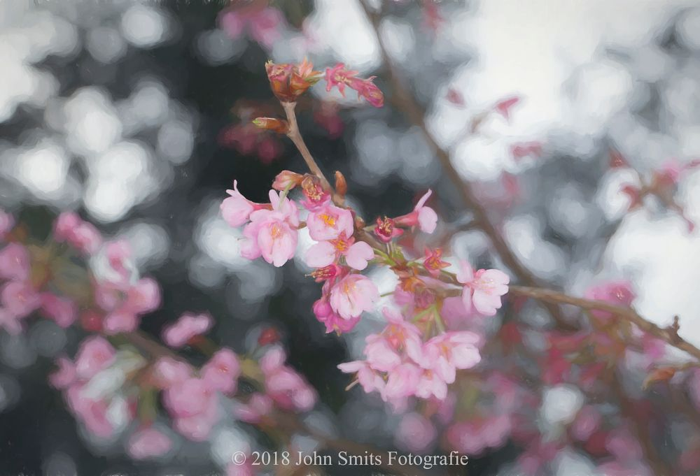 Photo in Nature #boom #tree #blossom #bloesem #flower #bloem #natuur