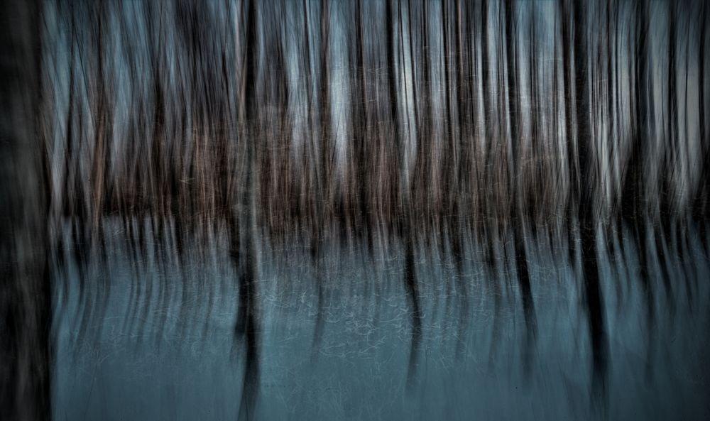 Photo in Abstract #sweden #hälsingland #söderhamn #birchforrest #winter #shakepic #freezing #trees