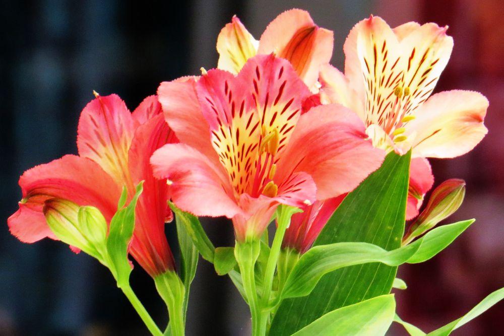 Photo in Nature #flowers #arranged flowers #franschoek