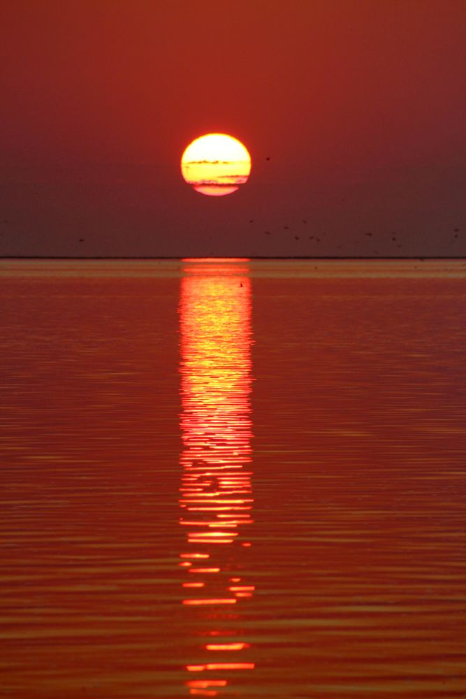 Photo in Nature #sunset #red sunset #sunsetcontest