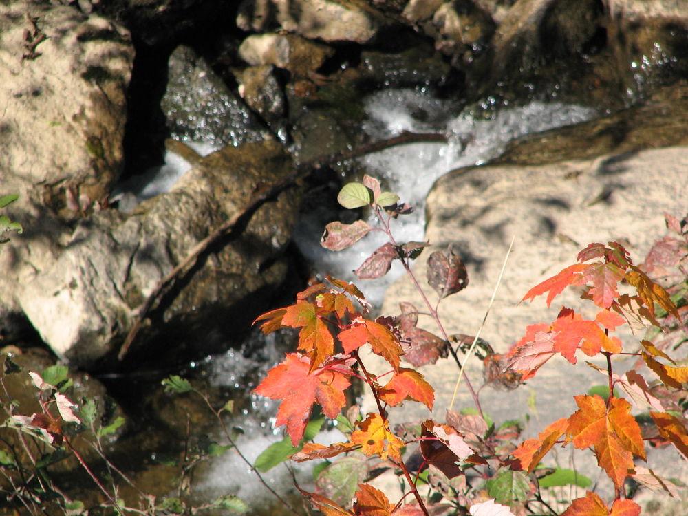 Photo in Landscape #maple leaf #fall #brook #stream #new brunswick #nashwaaksis