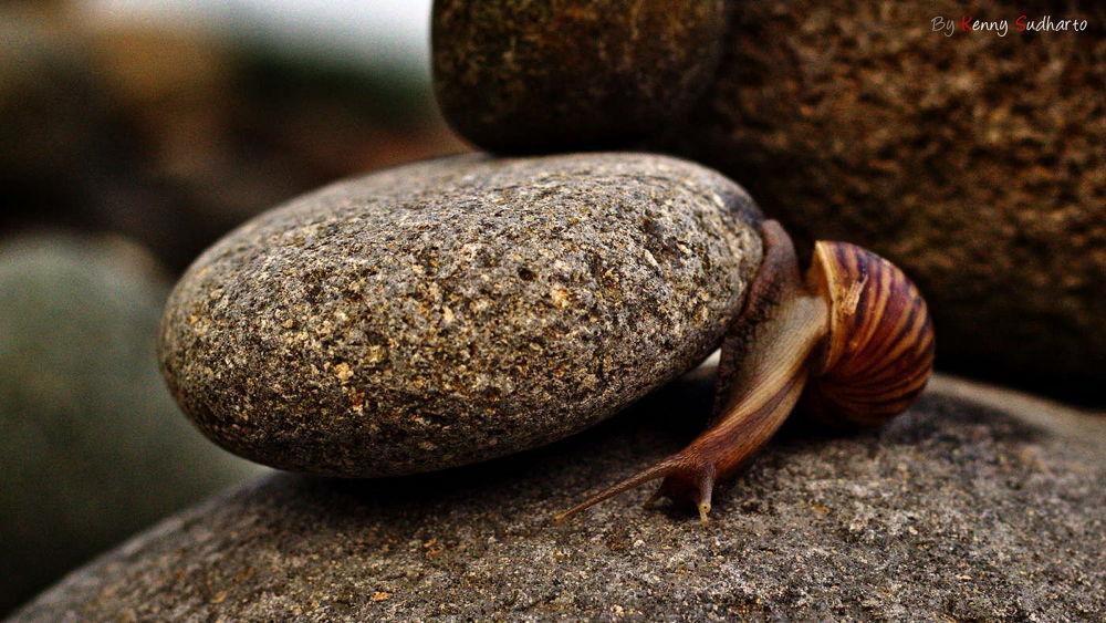 Photo in Animal #snail