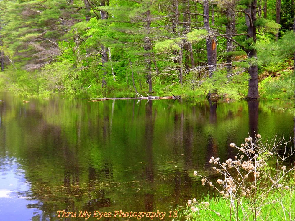 Photo in Random #pond #nature #random #summer