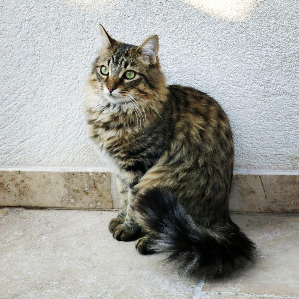 Photo in Random #cat #animals