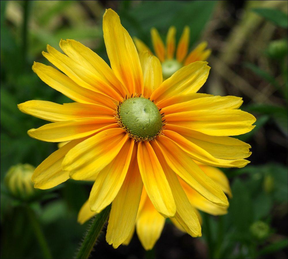 Photo in Nature #flower #yellow #nature #flore #art #jardin #random #garden #macro #fleur
