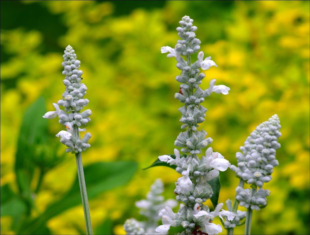 Photo in Nature #flower #nature #garden #macro #jardin #random #art #flore #yellow #fleur