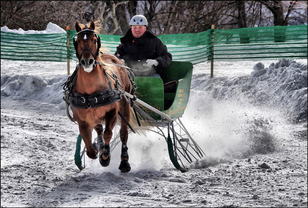 Photo in Sports #sport #random #cheval #horse #animal #winter #white #snow #neige #color