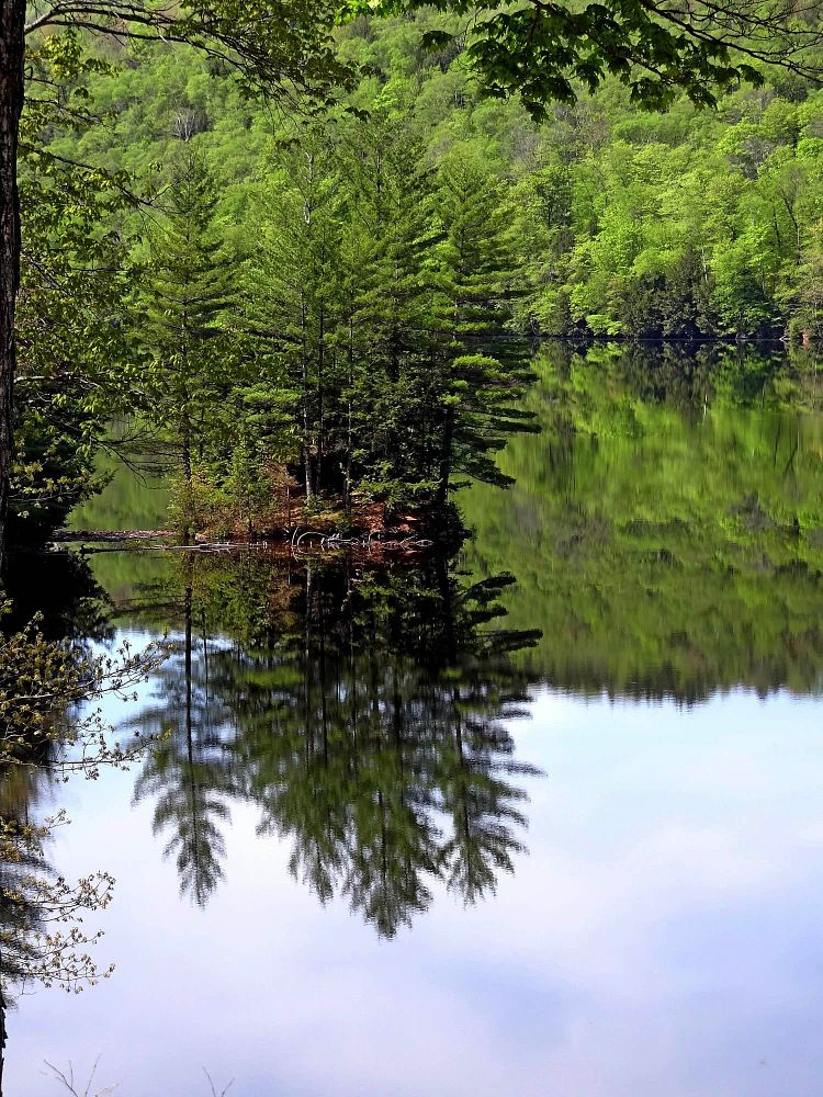 Photo in Landscape #maine #usa #kennebec #tiver #riviere #arbre #tree #nature #reflection #specialcontest