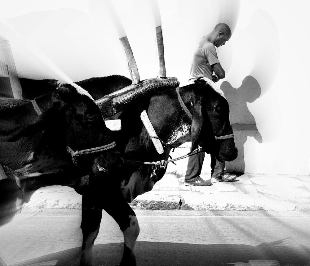 Photo in Black and White #divinoespiritosanto #faith #mogidascruzes #luistabelao #blackandwhite #monochromatic #animal