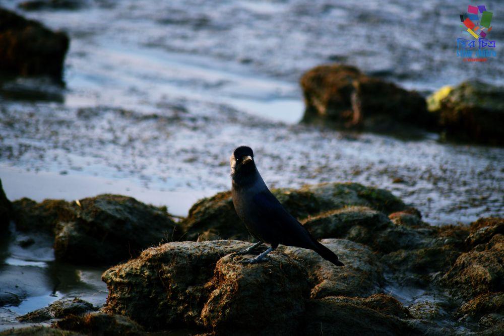 Photo in Nature #crow #bird #common