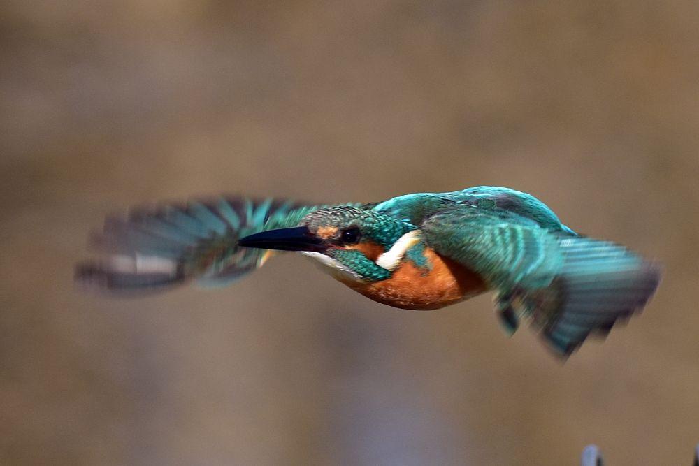 Photo in Animal #kingfisher #nature #bird