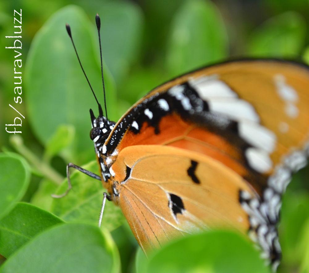 Photo in Nature #sauravbluzz