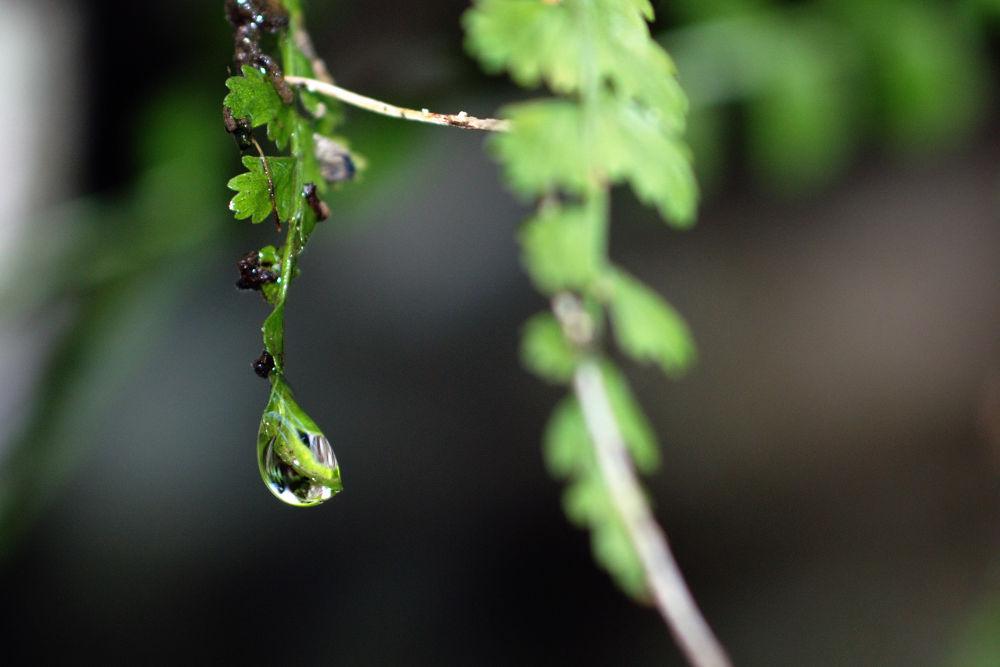 Photo in Nature #water drop goccia acquamacro n