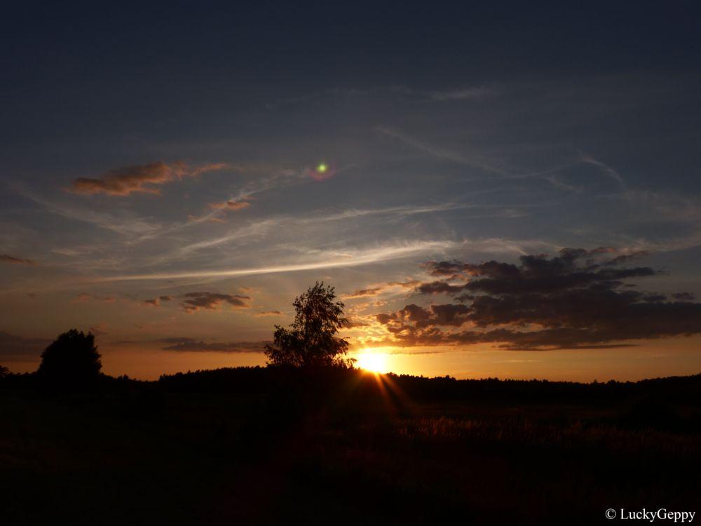 Photo in Nature #nature #sunset