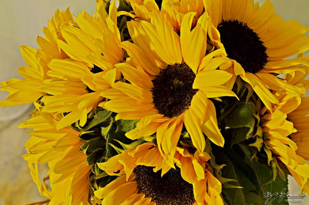 Photo in Random #sun #flower