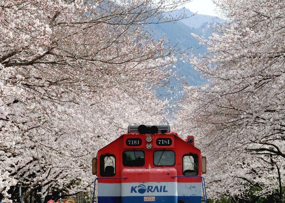 Photo in Travel #jinhae