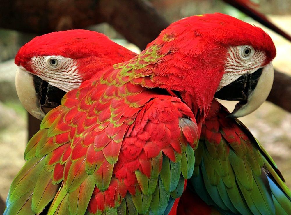 Photo in Travel #birds #panyu chimelong zoo #china