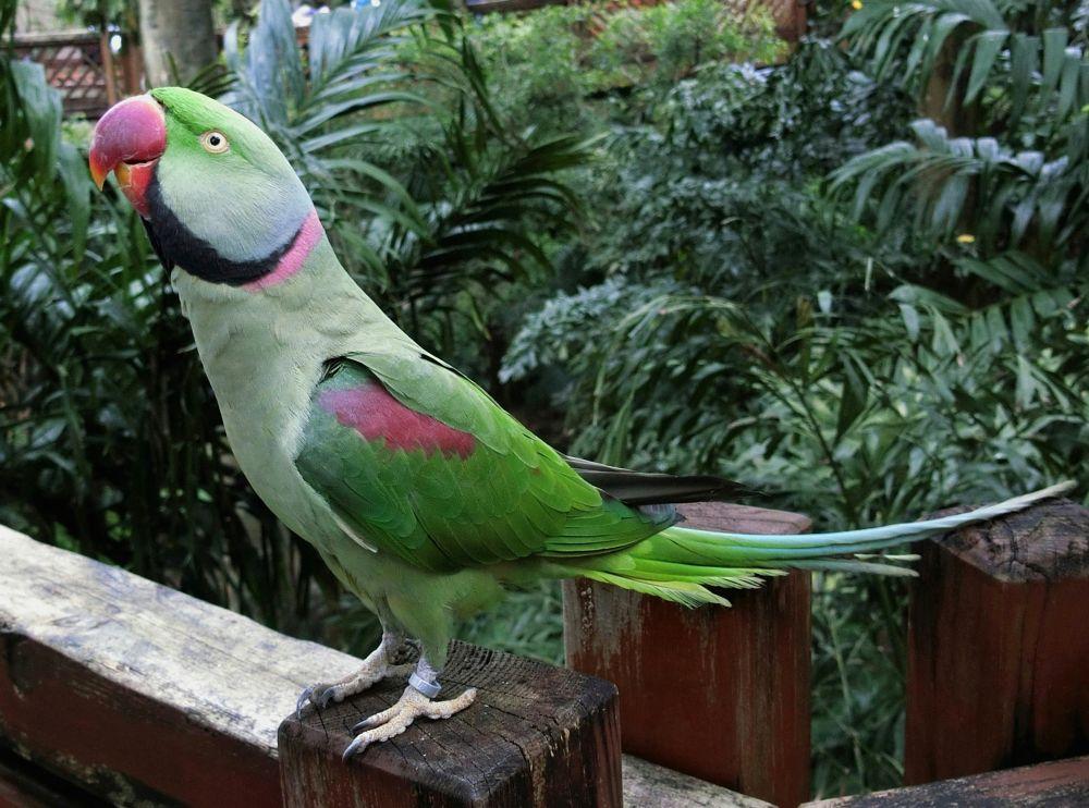 Photo in Nature #bird #hong kong