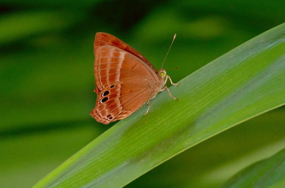 Photo in Nature #butterfly