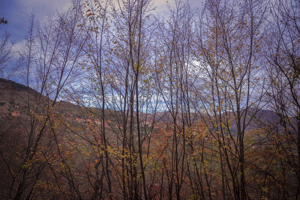 Photo in Nature #nature #forest #tree #mountains