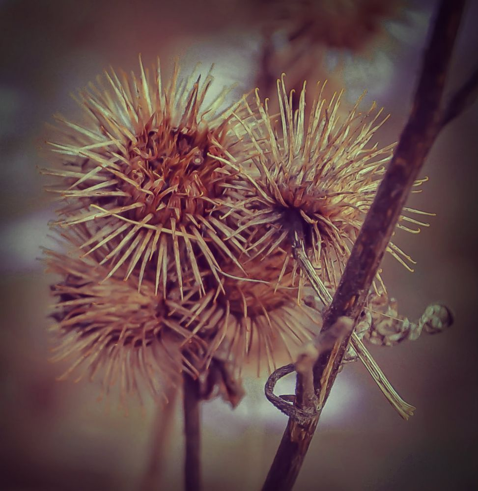Photo in Nature #nature #plants #winter #macro