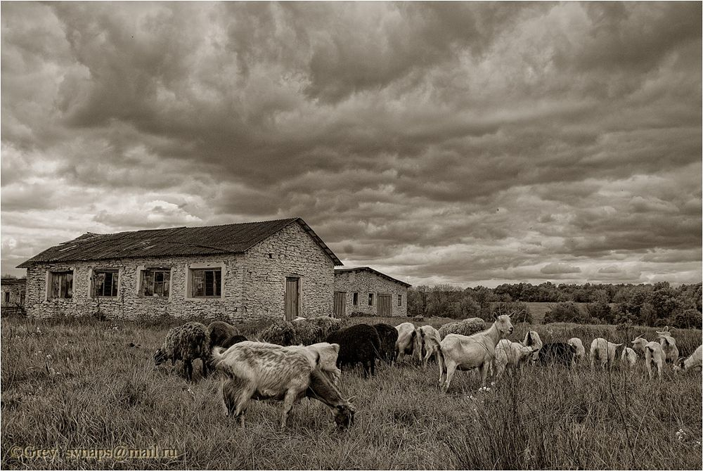 Photo in Landscape #clouds #sheeps