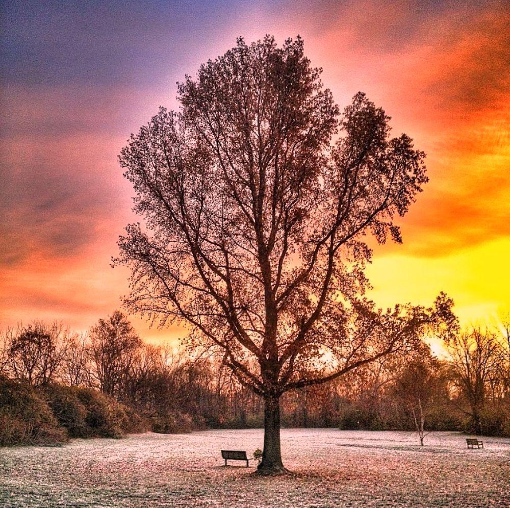 Photo in Random #sunrise #picoftheday #godscreations #winter #morning #beautiful