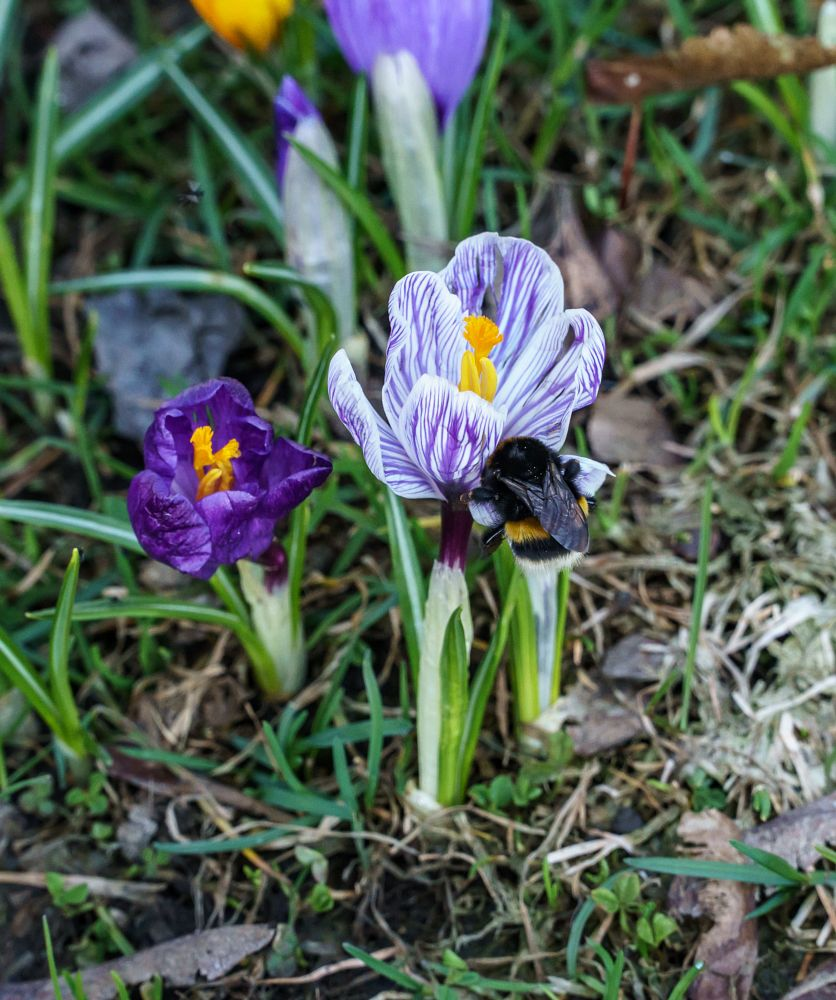 Photo in Nature #bees #blomster #flower #planter #spring